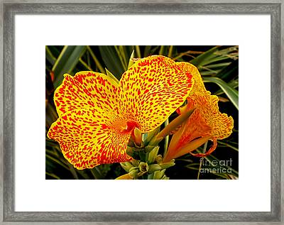 Canna Lily Framed Print by Kaye Menner