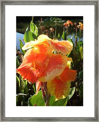 Canna Lily Light Framed Print by Warren Thompson