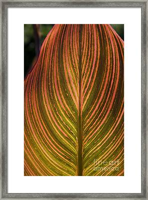 Canna Framed Print by Valerie Fuqua