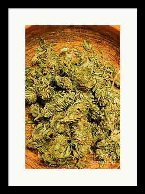 Marijuana Photographs Framed Prints