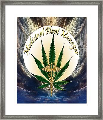 Cannabis Medicinal Plant Framed Print