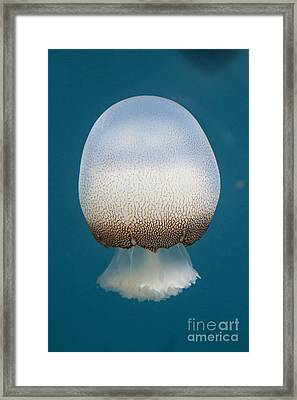 Cannonball Jelly Framed Print