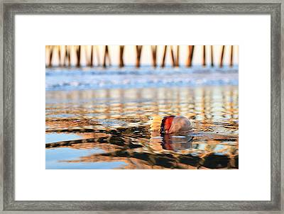 Cannonball Jellyfish Beached Framed Print
