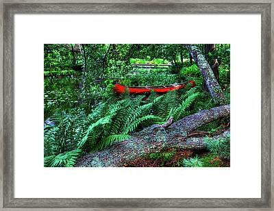 Canoe Among The Ferns Framed Print by David Patterson