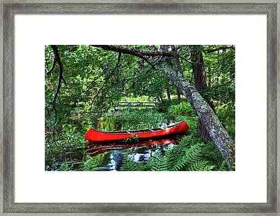 Canoe Under The Canopy Framed Print by David Patterson