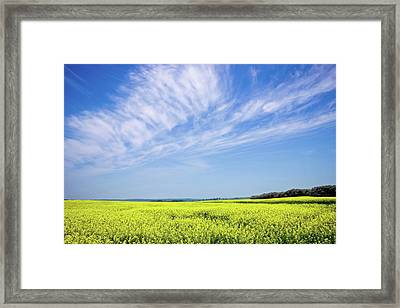 Canola Blue Framed Print