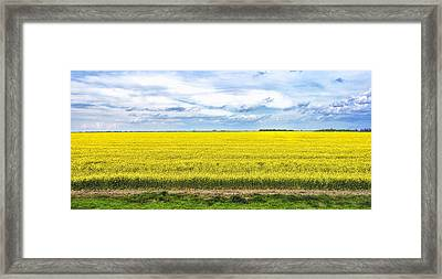 Framed Print featuring the photograph Canola Field - Photography by Ann Powell