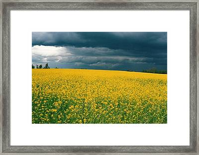 Canola Field Framed Print by Shirley Sirois