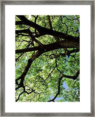 Canopy 1 Framed Print