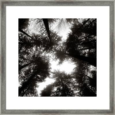 Canopy Framed Print by Dave Bowman