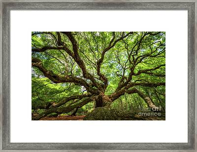 Canopy Of Color At Angel Oak Tree  Framed Print