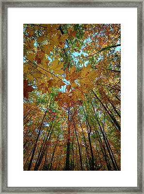 Canopy Of Color Framed Print by Rick Berk