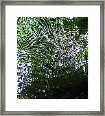 Canopy Of Ferns Framed Print by Elizabeth Hoskinson