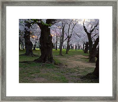 Canopy Of Pink 8x10 Framed Print