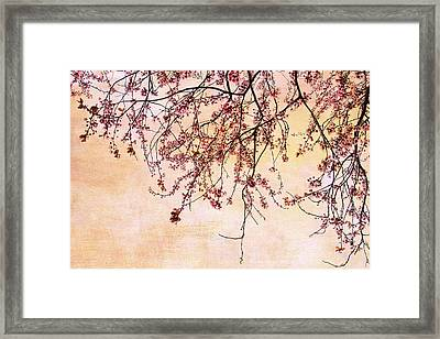 Canopy Framed Print by Rebecca Cozart