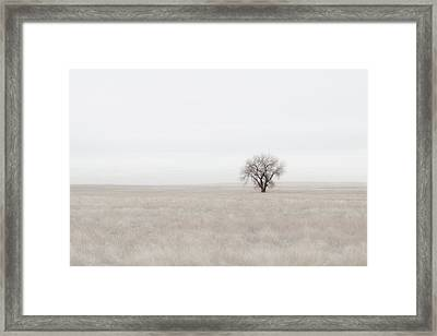 Canpaza Framed Print