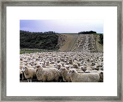 Framed Print featuring the photograph Cant Sleep - Count Sheep by Phil Stone