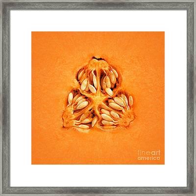 Cantaloupe Melon Inside Framed Print by Johan Swanepoel