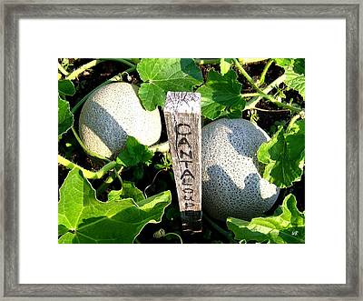 Cantaloupe Framed Print by Will Borden