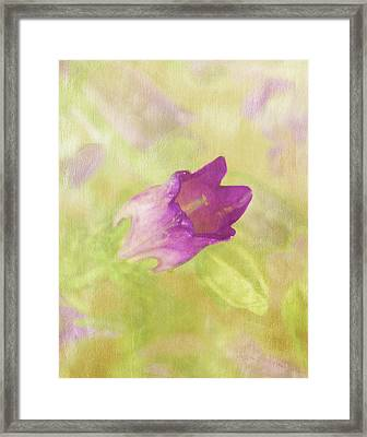 Canterbury Bell Flower Painted 2 Framed Print