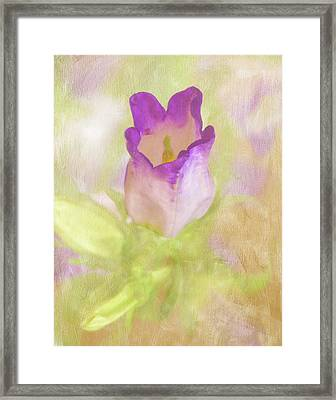 Canterbury Bell Flower Painted Framed Print