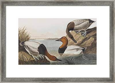 Canvas Backed Duck Framed Print