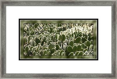 Canvas Of Cacti Framed Print