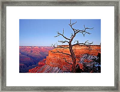 Canyon Tree Framed Print by Peter Tellone