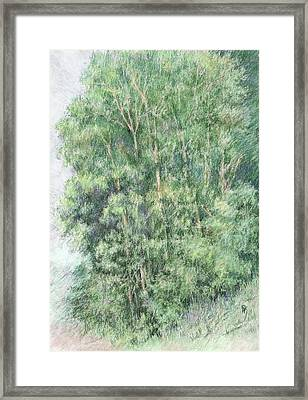 Canyon Trees Colorized Framed Print