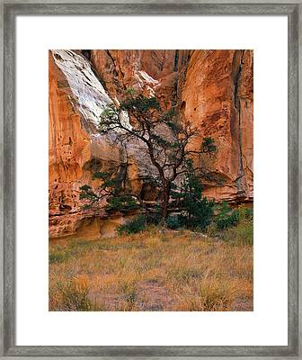 Canyon View With Tree Framed Print