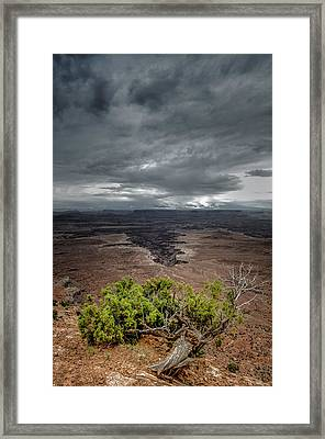 Canyonlands Juniper Framed Print by Joseph Smith