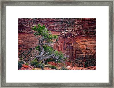 Canyonlands Juniper Framed Print by Rick Berk