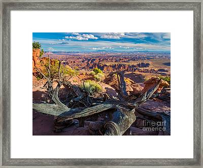 Canyonlands White Rim Framed Print by Inge Johnsson