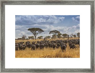 Framed Print featuring the tapestry - textile Cape Buffalo Herd by Kathy Adams Clark