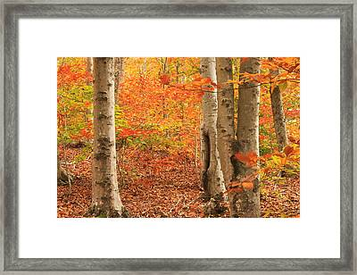 Cape Cod Foliage Framed Print by John Burk