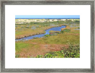 Cape Cod National Seashore Small Swamp Trail Early Autumn Framed Print by John Burk