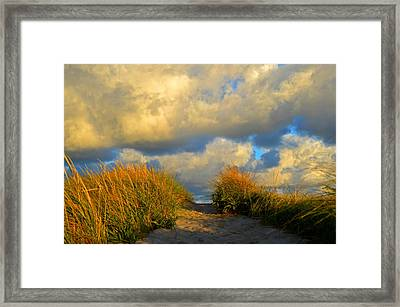 Cape Cod Sand Dunes Framed Print by Dianne Cowen