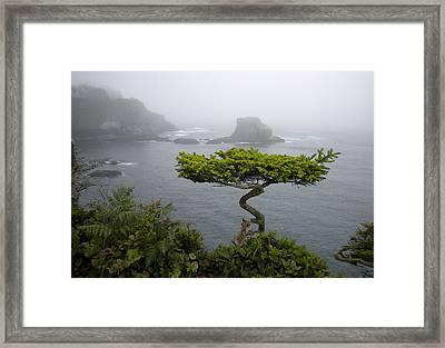 Cape Flattery Noble Framed Print