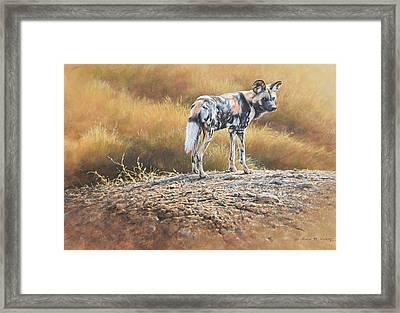 Cape Hunting Dog Framed Print
