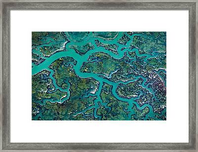 Capillaries Framed Print