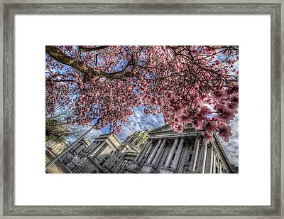 Capitol Blossoms Framed Print
