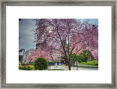 Capitol Tree Framed Print by Randy Wehner Photography