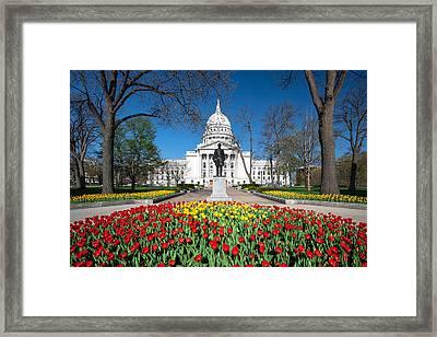 Capitol Tulips Framed Print by Todd Klassy