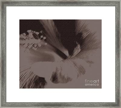 Cappuccino Framed Print by Linda Shafer