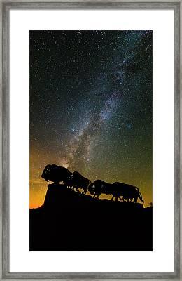 Caprock Canyon Bison Stars Framed Print by Stephen Stookey