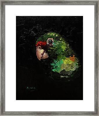 Captain The Parrot Framed Print
