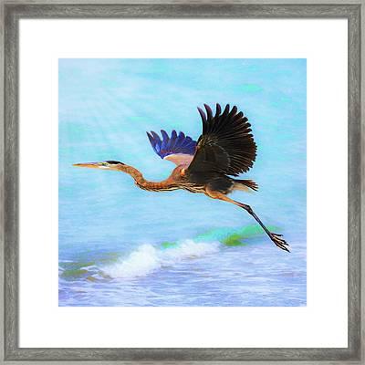 Captiva Crane In Flight Framed Print