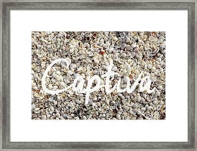 Captiva Island Seashell Framed Print