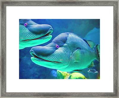 Captivating Pink Eye Framed Print