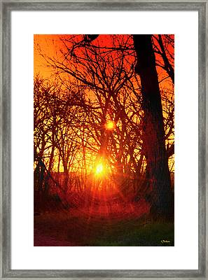 Captured By The Light Framed Print